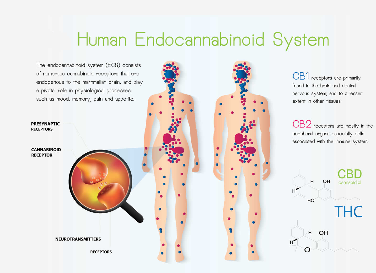 Endocannabinioid System