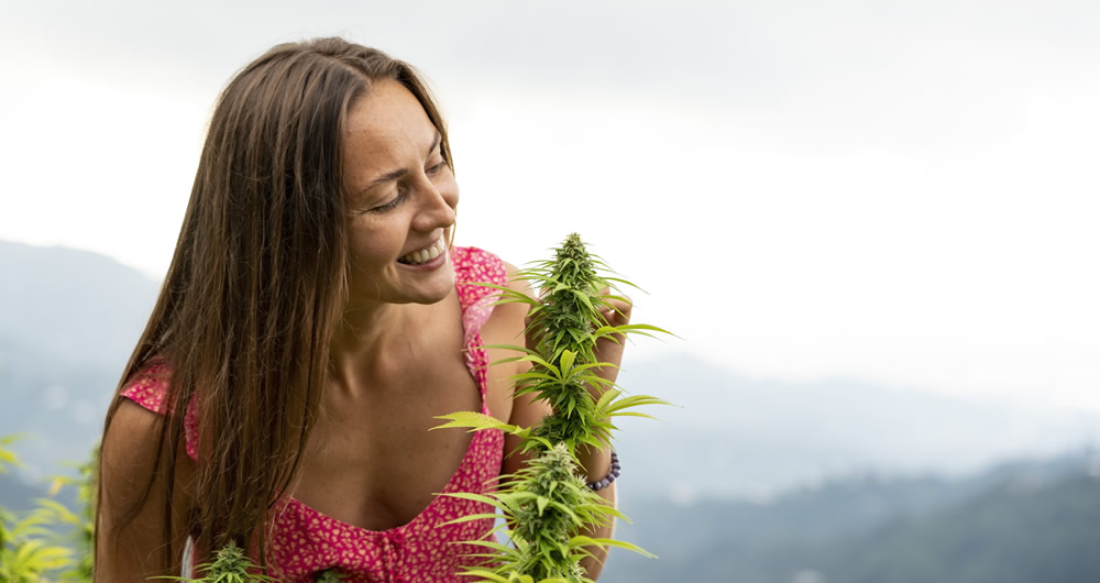 Medical Cannabis in Australia.